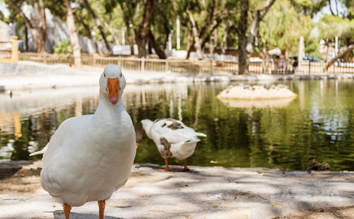 Mediterranean parklife in Guardamar