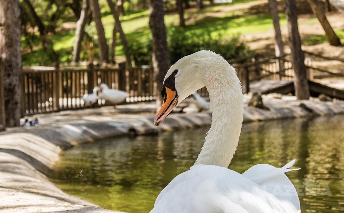 Public park in Costa Blanca South, Spain